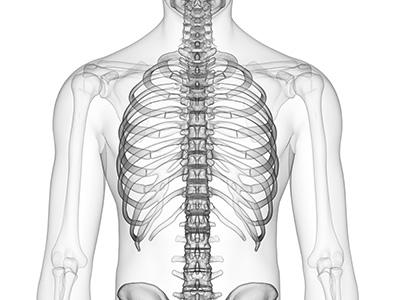 胸部・背部の痛みと症状|村上鍼灸院 (岩本町・神田・秋葉原・淡路町)